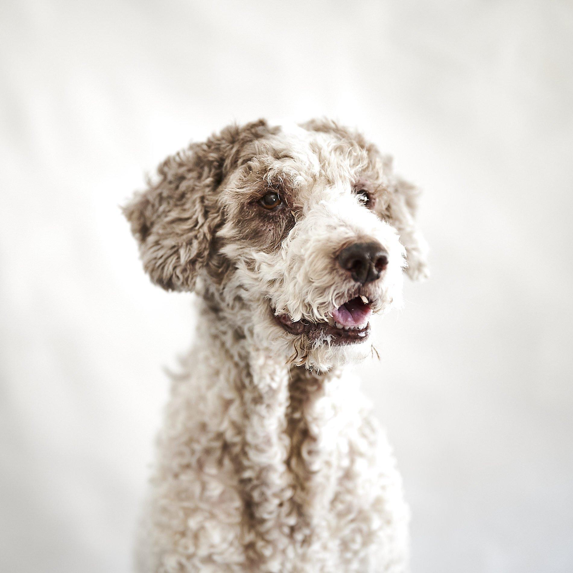 fotografo de perros y gatos
