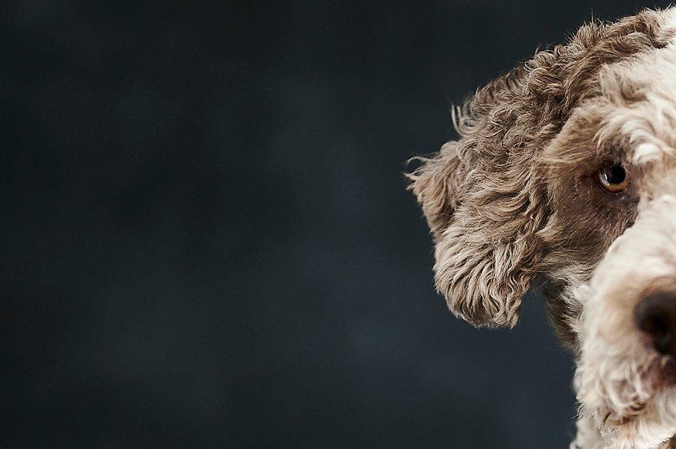 reportaje de familia con perros fotografo de perros